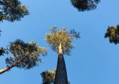 Metsakümblus eestis