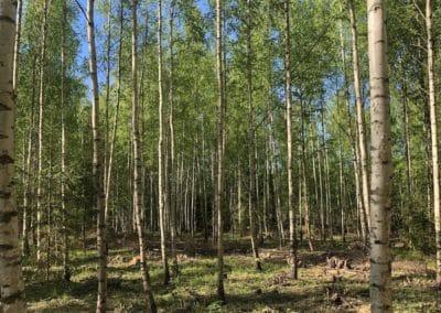 metsateraapia Eestis