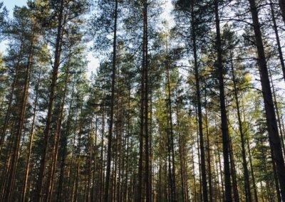 metsateraapia Eestis giidiga